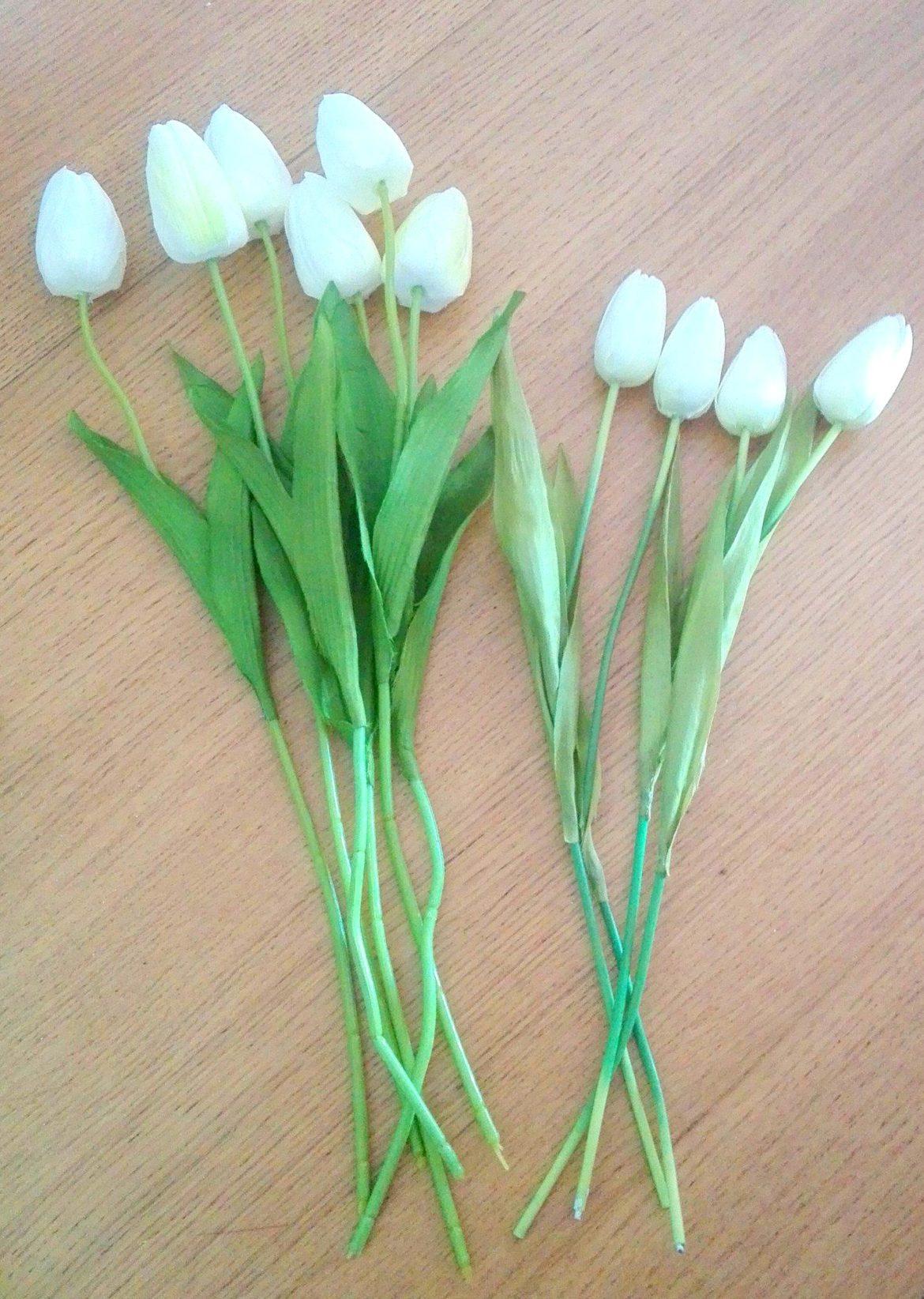 Tulipany na wiosnę