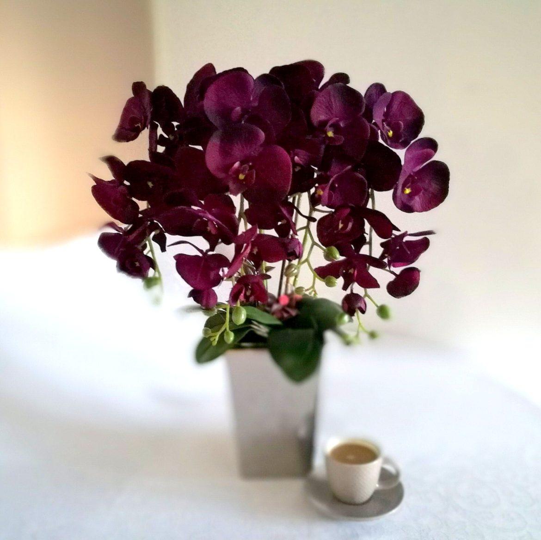 Storczyk ciemny fiolet