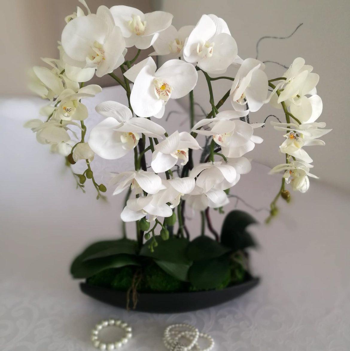 Storczyk w białym kolorze