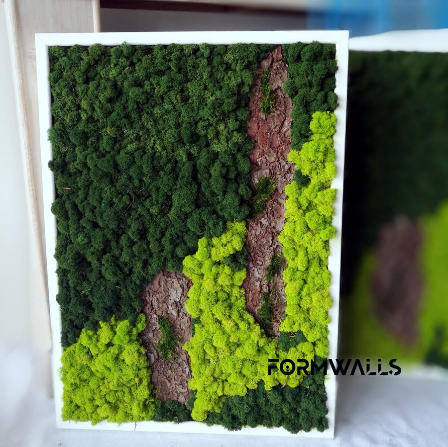 Obraz z chrobotka reniferowego 70 x 50 cm
